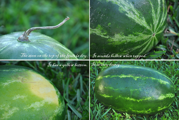 how to pick a ripe watermelon
