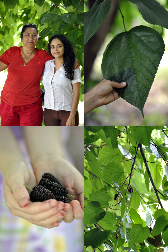 culinary uses for mulberry tree