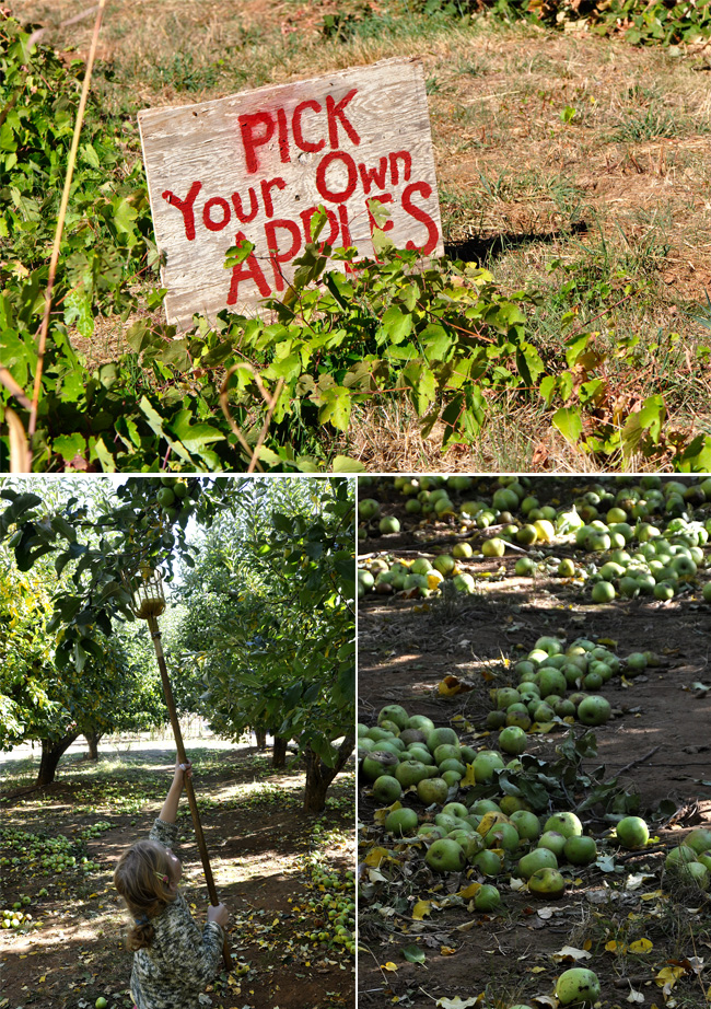 apple orchards in California